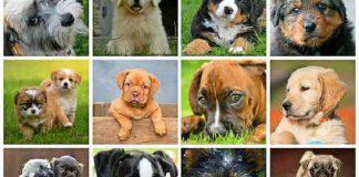 Segno zodiacale dei cani